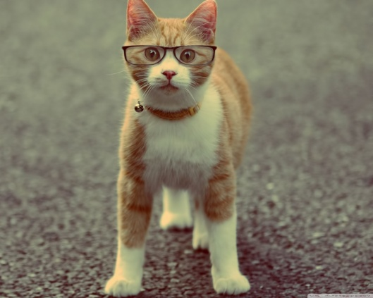 geek_cat-wallpaper-1280x1024.jpg