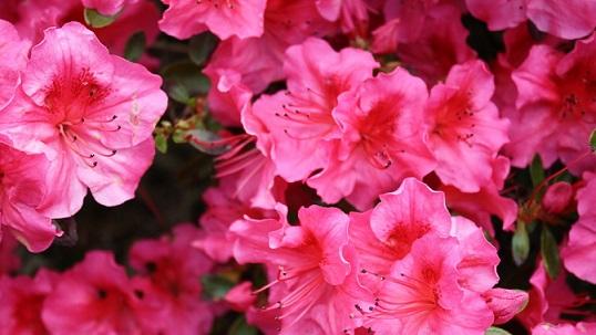 Hindi Poems on Flower   Hindi Poems हिंदी कविता