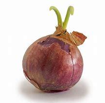 onion-pyaz